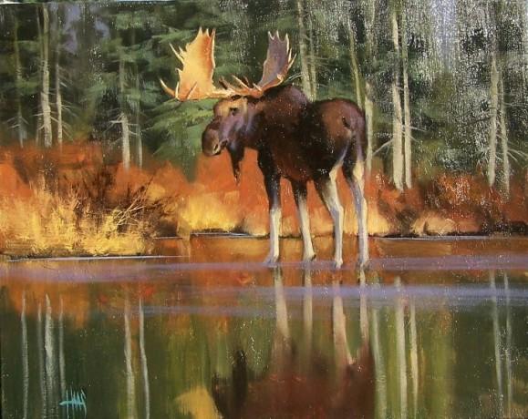 """Bull Moose 20"""" x 24"""" oil painting by Tom Haas"""