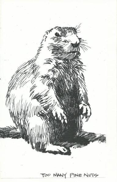 Wildlife drawing