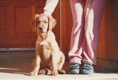 Sam puppy 10 weeks photo