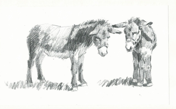 Two Burros graphite sketch by Tom Haas